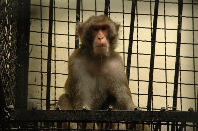 Ялтинский зоопарк «Сказка» в Крыму