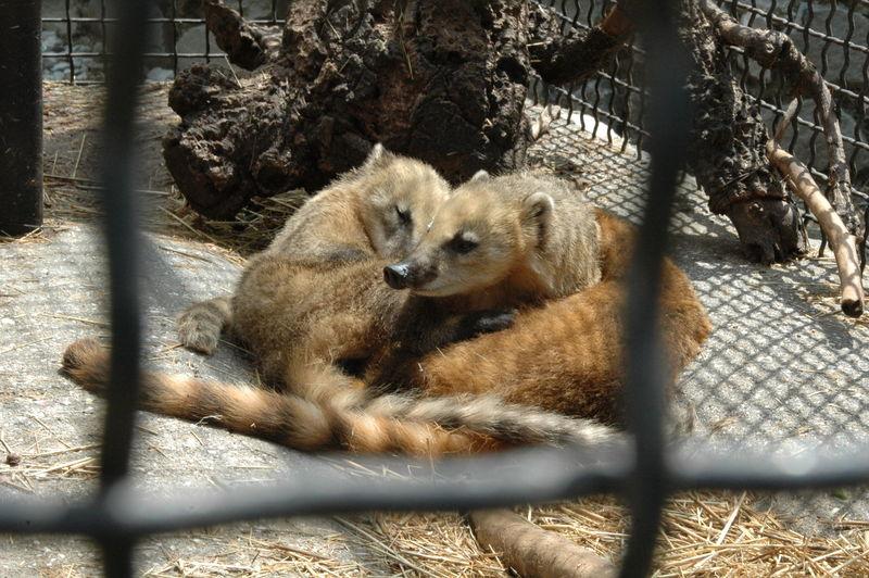 Ялтинский зоопарк «Сказка»: отдых в Крыму